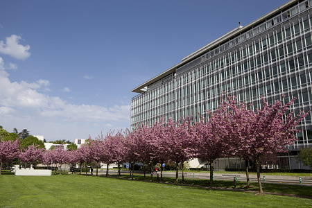 Different views of the headquarters in Geneva, Switzerland  Spring arrives at the WHO headquarters, in Geneva.